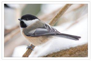 Beautiful wild birds in the Catskills