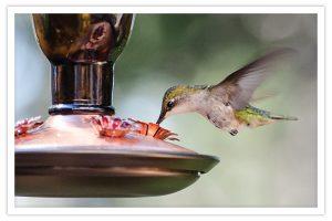 Hummingbird at a hummingbird feeder