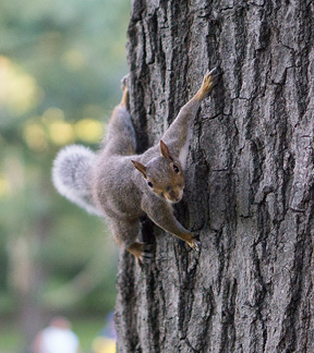Squirrel on trees compete for the bird seed