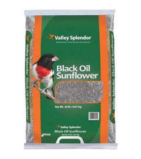 Bag of popular Black Oil Sunflower Seed
