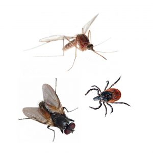 Mosquitoes and ticks photos