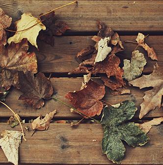 Brown cedar-stained deck